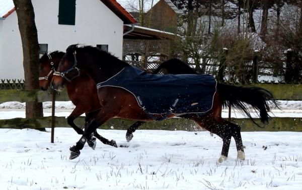 eschenbruch_27-02-2014_schnee_03