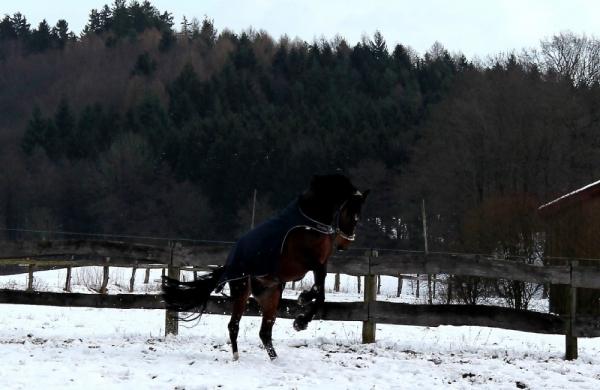 eschenbruch_27-02-2014_schnee_06