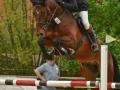 Donop_11-05-2013_Springpferde-A_01