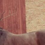 Eschenbruch, 18.11.12 Exterieur, Fotografin Saskia Biesgen