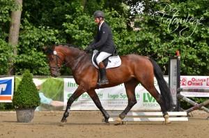 Reiter sitzt auf laufendem Pferd bei einer Eignungsprüfung