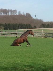 braunes Pferd auf grüner Wiese bei schönem Wetter