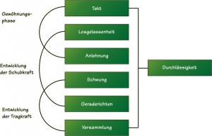 Skala der Ausbildung Autor / Verlag: Richtlinien für Reiten und Fahren / FNverlag der Deutschen Reiterlichen Vereinigung