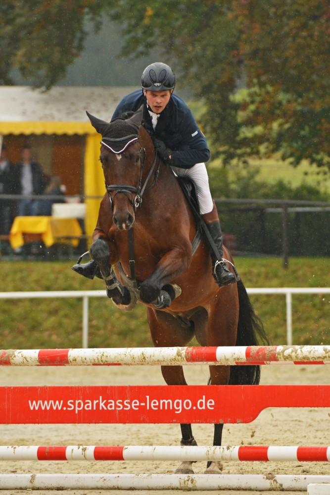 Maik und Holsteiner Consuelo beim Sprung bei der Springpferdprüfung in Humfeld Doerentrup am05.10.13