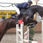 Bad Salzuflen, 08.11.13 Springpferde L, Reiter Maik Schlingheider
