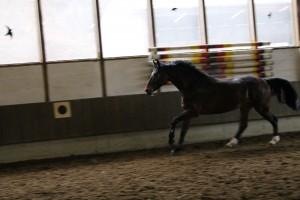 Eschenbruch, 04.01.14 Consuelo beim Freispringen