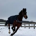 Eschenbruch, 27.01.14, Consuelo spielt im Schnee