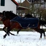 Eschenbruch, 27.01.14 Conuelo im Schnee