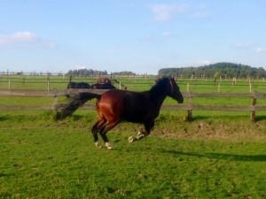 Am Donnertag, 04.09.14 Consuelo hat Spaß auf der Weide
