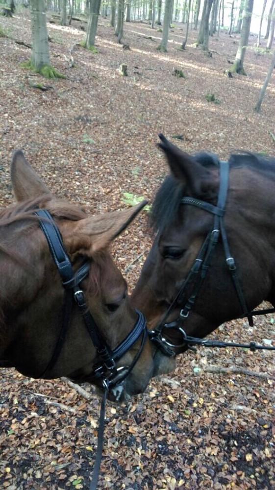 Consuelo und Barneby beim Ausritt 19.10.14