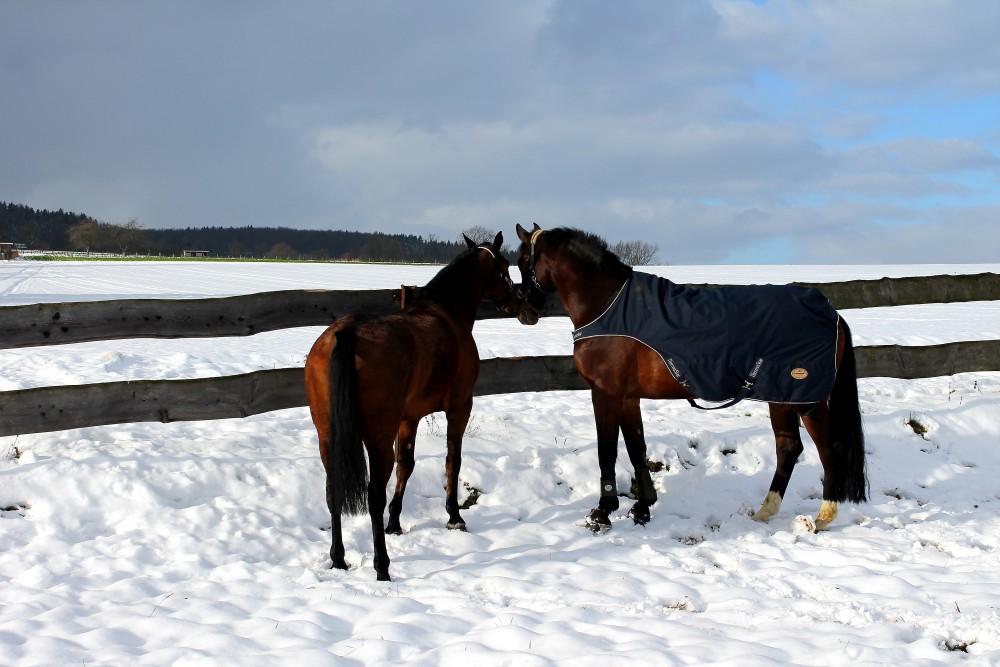 Consuelo mit seiner Freundin, Januar 2015
