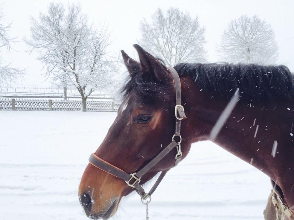 Consuelo im Schnee, Januar 2015