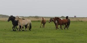 Pferdeherde 2015