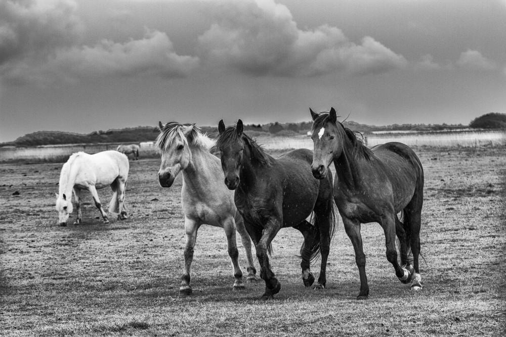 """Flucht vor der Vergangenheit: 1. Kapitel, """"Als erstes werde ich für euch eine passende Pferdefamilie finden"""