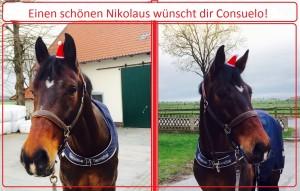 Consuelo Nikolaus 2015-1