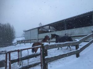 Consuelo mit seinem Kumpel im Schnee, Januar 2015